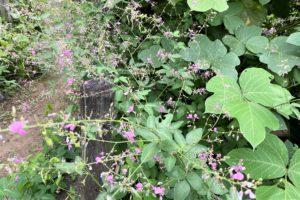 野草園の花1
