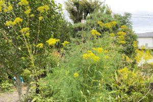 野草園の花2
