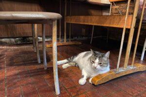 カフェ・ルミエール)机の下のジュニくん