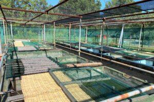 葛飾区金魚展示場)池の上のフタ